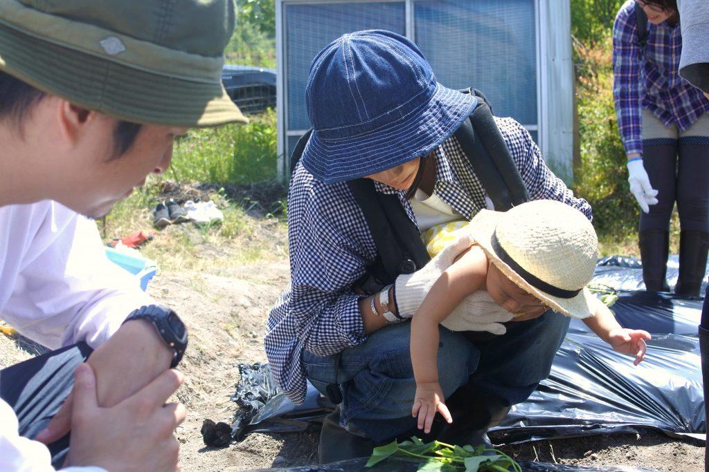 初めてのサツマイモ植え体験